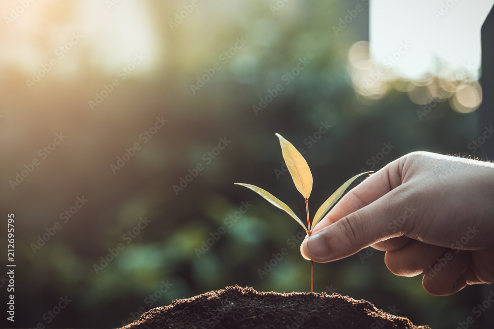 Fototapeta trees growing seedlings in hands. Bokeh green Background Female hand holding tree on ield grass Forest conservation and growing concept