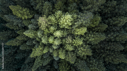 In de dag Khaki Treetops and Cloudy Forest From Above