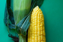 緑の背景と実をつけたトウモロコシ