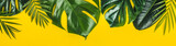 Fototapeta Fototapety na ścianę - Tropical leaves on yellow background