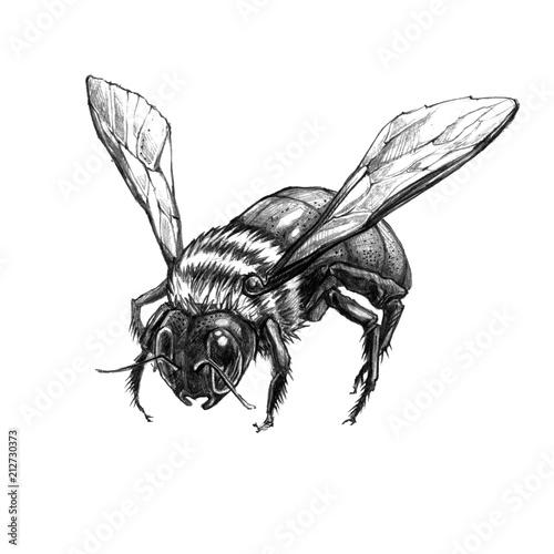 Beautiful hand drawn Bee Fototapet