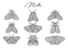 Ink Butterflies And Moths Collection. Hand Drawn Vector Illustration. Ideal For Coloring Print