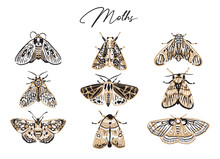 Cute Butterfly And Moth Collection In Retro Style. Beautiful Craft And Red Moths Illustration