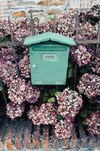 Green Mailbox And Pink Hydrang...
