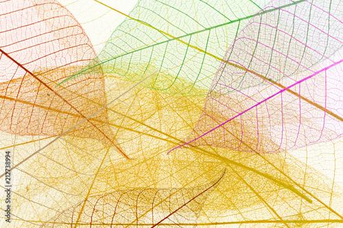 Fotografía fond de feuilles décoratives