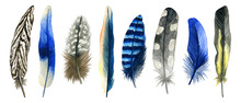 Watercolor Hand Drawn Isolated Set Of Blue Feathers