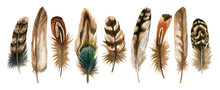 Watercolor Hand Drawn Isolated Set Of Brown Feathers