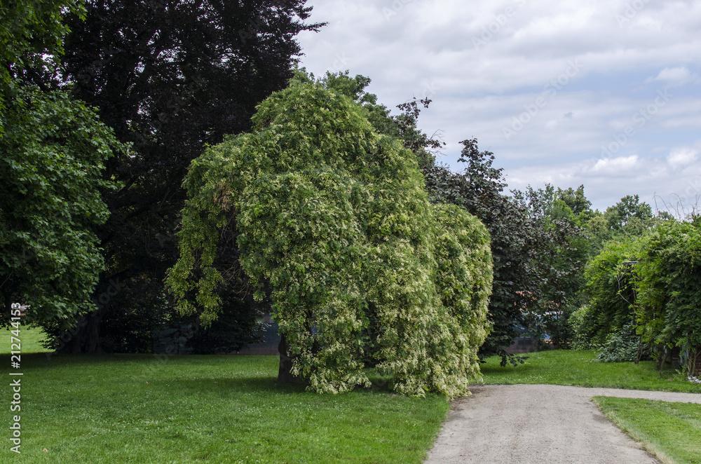 Fototapeta ogród park