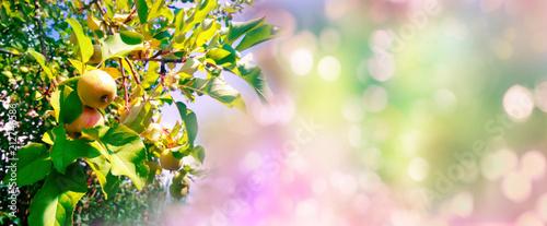 Apple tree twigs