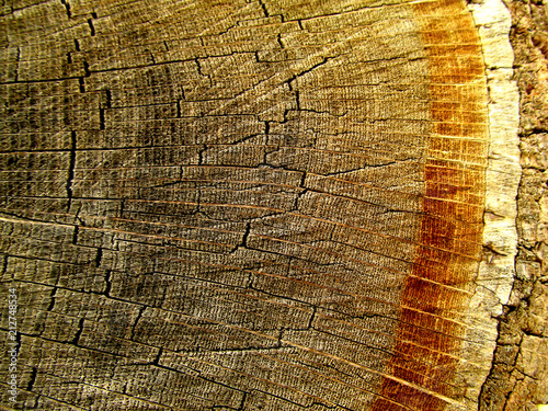 Staande foto Vintage Poster Detailed close up of the rings of bark on a cut section of a tree log.