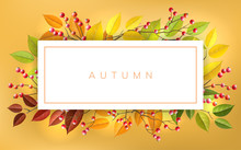 Autumn Banner Frame With Red Berry And Autumn Branches And Leaf. Horizontal Banner With Fall Colors For Nature Design And Background
