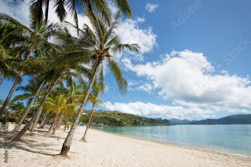 Palm trees with clouds in sky at Catseye Beach, Hamilton Island Canvas Print