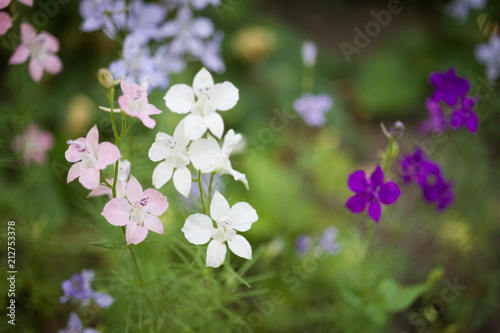 Small Pink White And Purple Flowers In The Garden Kaufen Sie