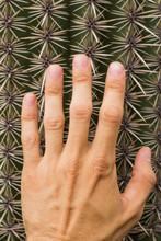 Close Up Of Big Cactus And Hand On It