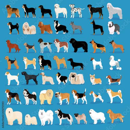 Stampa su Tela Very big set of dogs