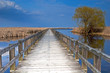 Marsh boardwalk at Point Pelee, Canada