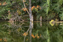 Colorful Reflections On A Quiet Pond