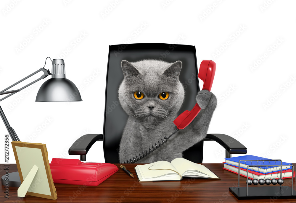 Cat sitting on leather chair with telephone. Isolated on white