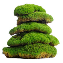 Stack Of Moss Clumps Isolated ...