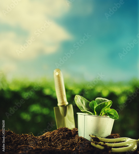 Fotobehang Planten Planting a small plant on a pile of soil with Gardening tools on green bokeh background.
