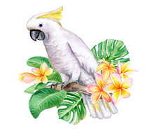 White Cockatoo Sitting On A Branch Isolated On White Background. A White Parrot With Tropical Flowers Frangipani, Plumeria. Watercolor. Illustration. Template. Handmade. Close-up. Clip Art.