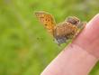 Motyl | Butterfly