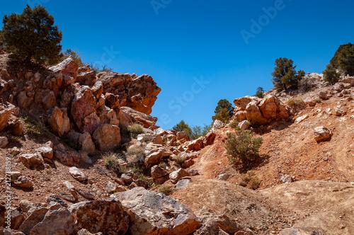 Deurstickers Zalm Gold Mountain