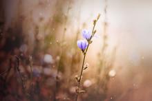 Lila Blüte In Feld