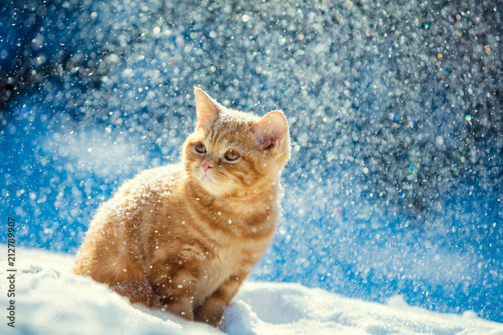 Red kitten sitting outdoors in snow in winter in blizzard