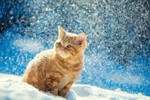 Red Kitten Sitting Outdoors In...
