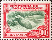 Hippopotamus On Vintage Postag...