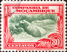 Hippopotamus On Vintage Postage Stamp Of Mozambique