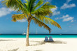 Sun beds under a palm tree on exotic Barbados beach