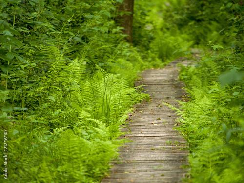 Foto op Canvas Weg in bos Ścieżka w lesie