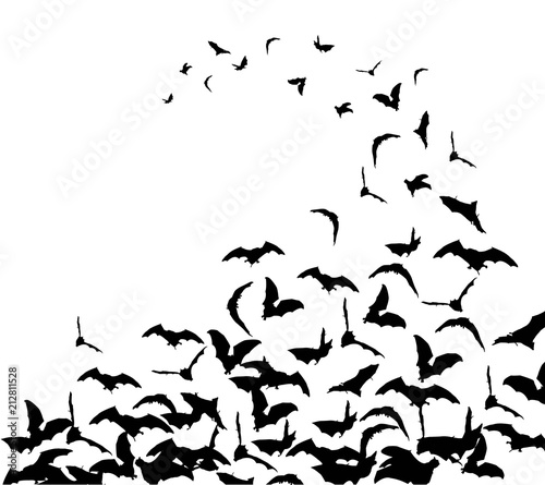 Flying bats in the sky Wallpaper Mural