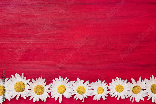 Foto op Canvas Madeliefjes Summer background. White daisy border on red background. Copy space, top view. Flat lay