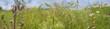 Leinwandbild Motiv weeds - nettle, thistle, wormwood on a field close up