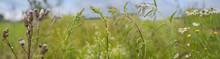 Weeds - Nettle, Thistle, Wormw...