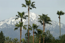 Palms And San Bernardino Mount...