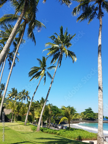 Fotografie, Obraz  Palm trees overlooking the Indian Ocean