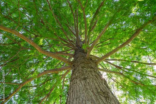 Photo  大木の幹