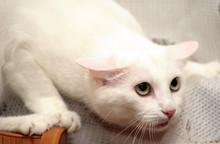 Frightened White Cat