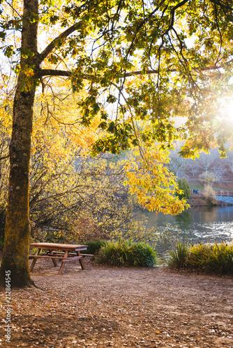 Fotobehang Zwavel geel Warm autumn afternoon in a botanical park.