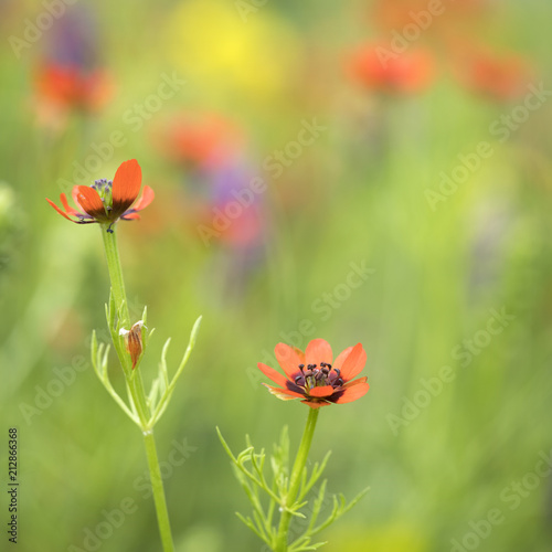 Keuken foto achterwand Bloemen colorful summer flowers in several different colors bloom in natural french field
