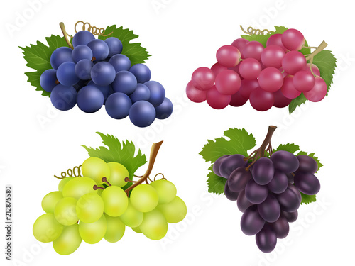 Fototapeta Realistic grapes. Vector set of various grape variety