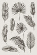 Hand drawn branches and leaves of tropical plants. Black floral set isolated on grey background. High detailed botanical illustration