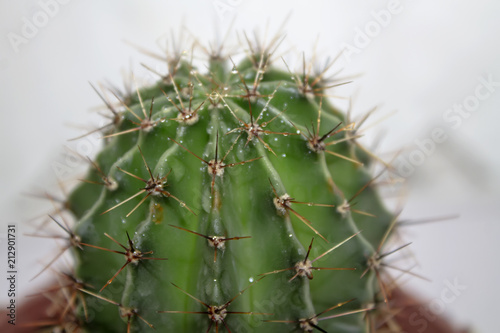 Foto op Aluminium Cactus Green cactus round shape in pot isolated on white background.