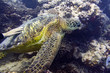 hand caressing green turtle close up portrait underwater