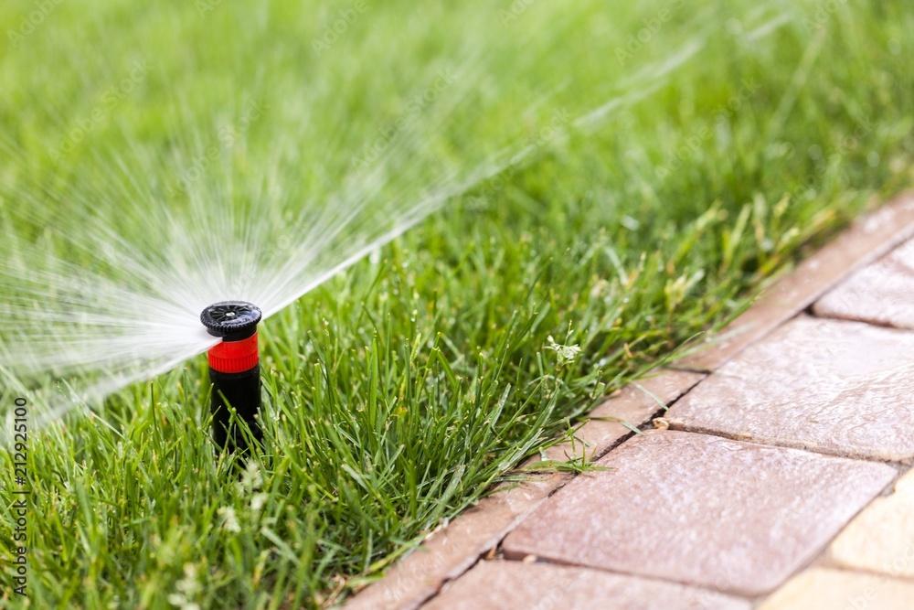 Fototapety, obrazy: Lawn Sprinkler