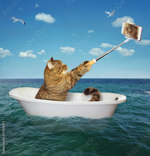 Photo  The cat is sitting into the tub and making a selfie in the sea.